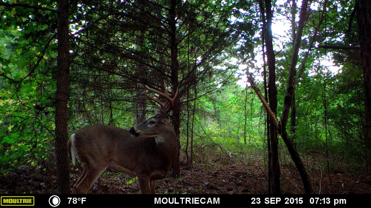 Three Things To Prepare For Next Deer Season