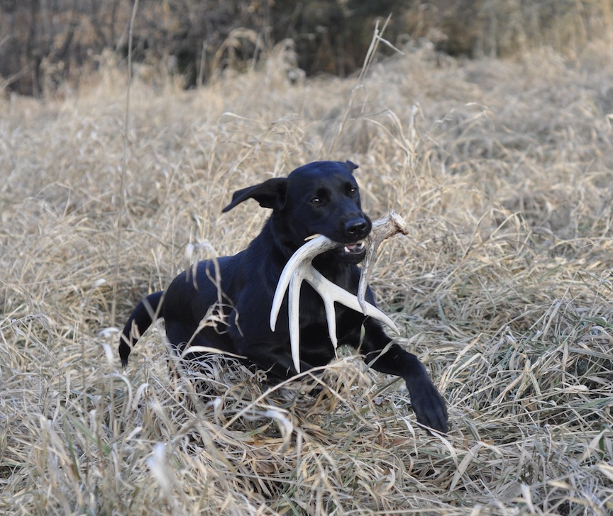 Shed Hunting: Where To Find Them