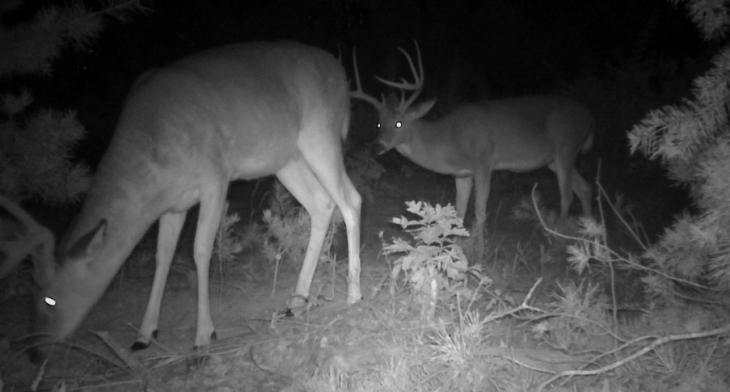 quality deer hunting sits