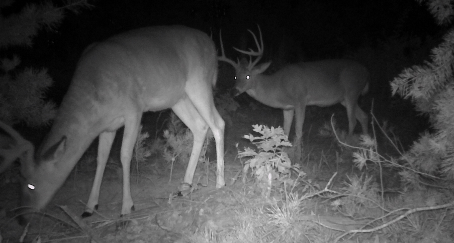 3 Tactics to Late Season Scouting