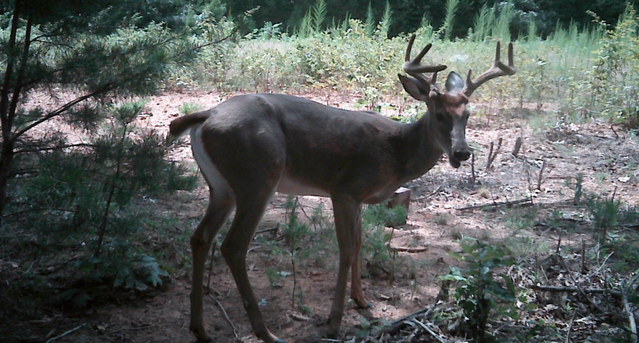 three deer stand locations