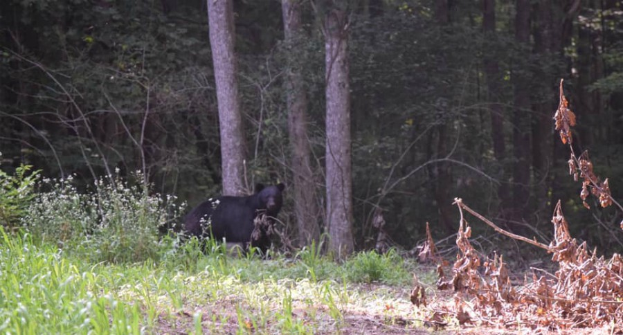 WHITETAIL GURU HUNTING PODCAST #37: DIY BLACK BEAR HUNT IN SOUTHERN APPALACHIA