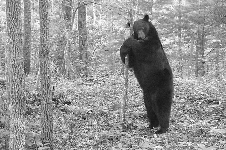 Whitetail Guru Hunting Podcast Episode 42 Bear Hunting